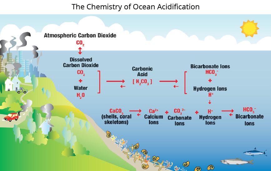 The Chemistry of Ocean Acidification