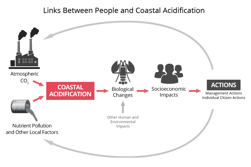 Links Between People and Ocean Acidification