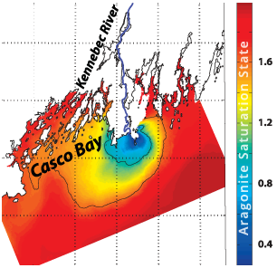 Coastal Acidification by Rivers: A Threat to Shellfish?