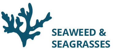 Seaweed and Seagrasses